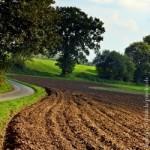 Bild eines Ackers zum Thema ländlicher Raum und Landwirtschaft