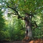 Wald, Beberbeck, Forstpolitik, Ländlicher Raum