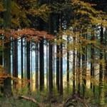 Wald5, Forstpolitik, Ländlicher Raum