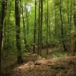 Kellerwald, Naturschutz, Umweltschutz, ländlicher Raum