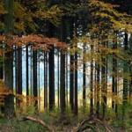 Wald, Umweltpolitik, Umweltschutz, Forst, Ländlicher Raum