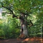 Beberbeck, Wald, Forst, Ländlicher Raum