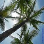 Palmen, Finanzpolitik, Steuerhinterziehung