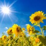 Landwirtschaft, Umwelt, Natur, Solar, Sonnenenergie, Erneuerbare Energien