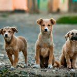Welpen, Welpe, Hund, Hunde