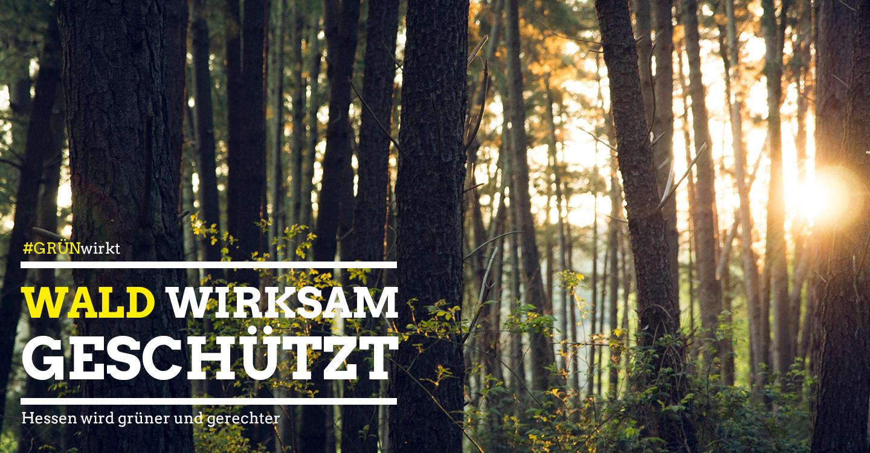 Wald, GrünWirkt, C00, Unsplash