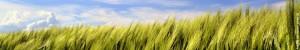 Headerbild Landwirtschaft