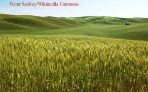 Landwirtschaft 480