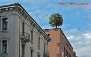 Baum-auf-dem-dach