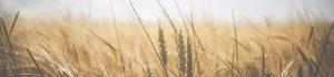 Thema: Ländlicher Raum und Landwirtschaft