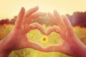 Sonnenblume in einem von einer Hand geformten Herz